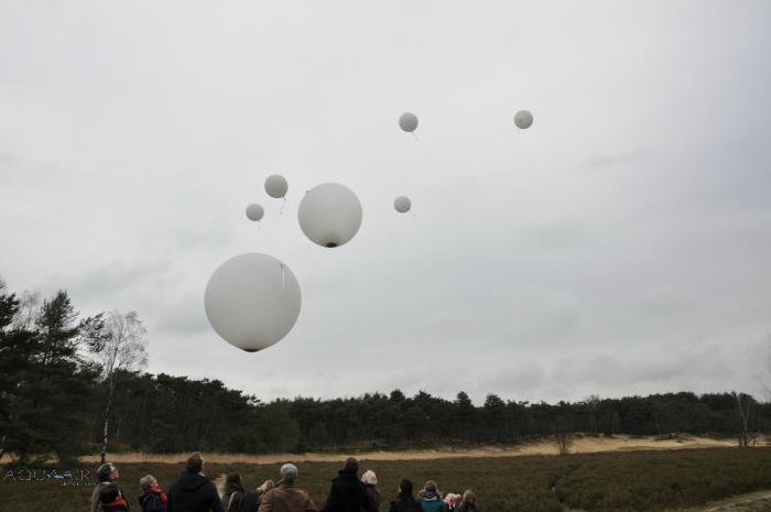 Asverstrooiing-met-heliumballonnen-bergen-op-zoom